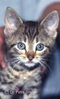 was kostet impfung für katzen